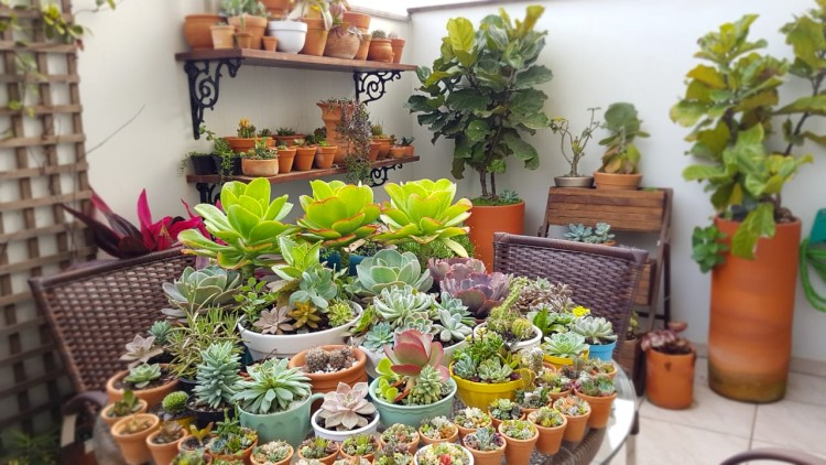 amor e planta